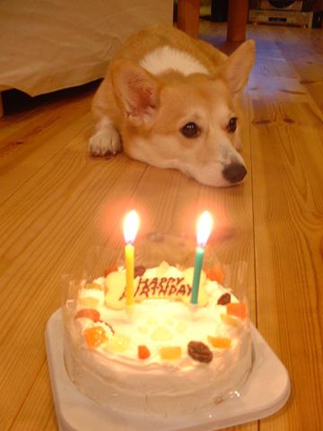 このケーキは!?
