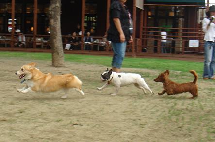 狩猟(される)犬