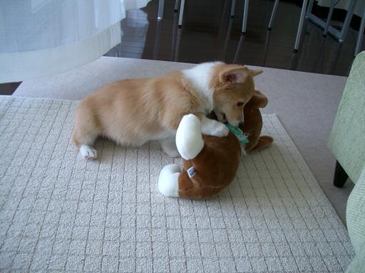 格闘する仔犬