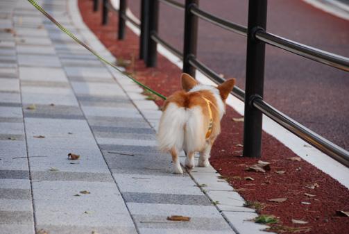 実家の散歩道