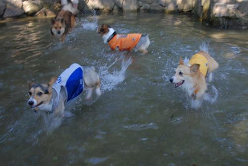 池内を爆走