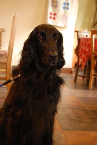 こちらハリーくん。暗い室内で黒い犬を撮るのはとっても難しい