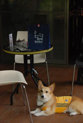 テーブルの上のバッグがそれです