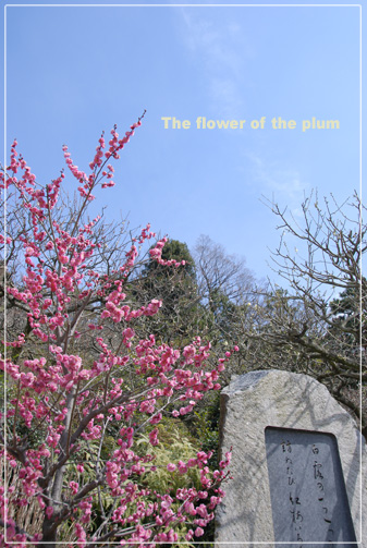 稀に咲いている木があった