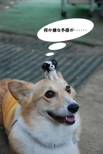 普通の犬は匂いで食べ物じゃないと判断できるハズだが……