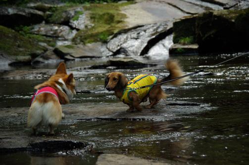 水上の決闘