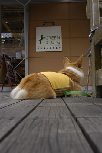 GREEN DOG前にて