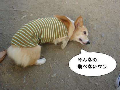 苦悩する犬