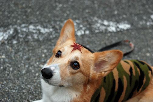 ディスプレイ犬