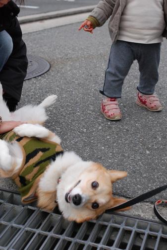 溝が近くてびっくりする犬