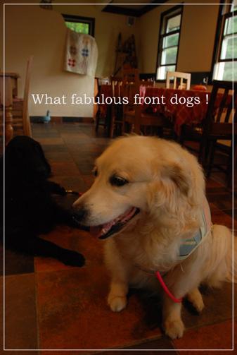 素晴らしき看板犬たち