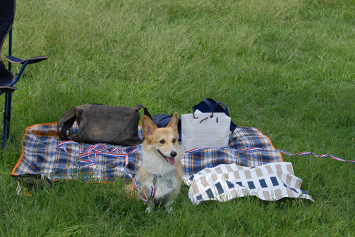 草原の上で飼い主を待つ
