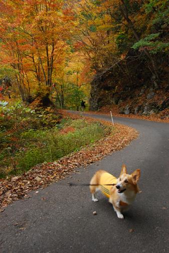よく見るとハルさんは秋色をしている