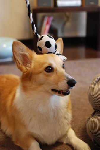 宇宙と交信する犬型ロボット