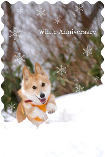 雪まみれの記念日