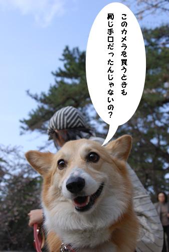 全てを知る犬