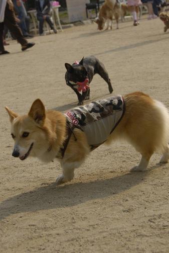 テケテケ歩き