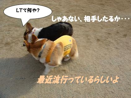犬のいい犬