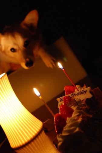 人間用ケーキ