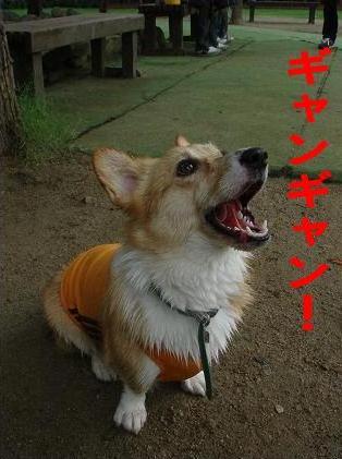 吠えない犬